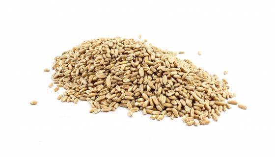 Organic Spelt Grain image