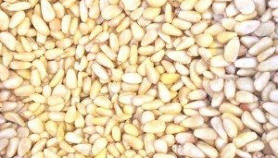 Organic Pine Nuts image