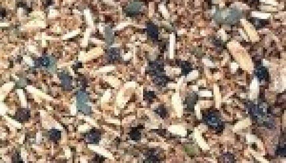 Organic Paleo Apple & Cinnamon Muesli image