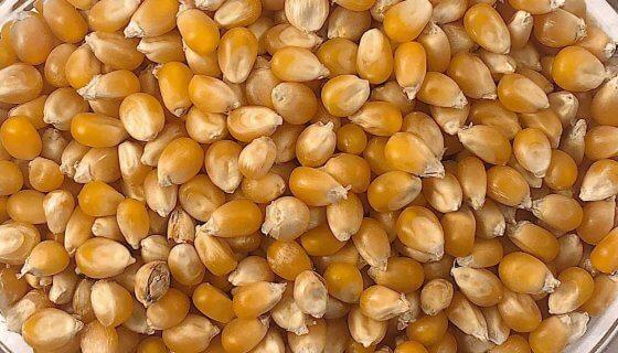 Organic Popping Corn image
